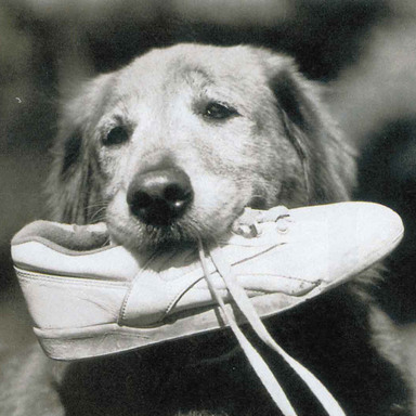 Tretorn Athletic Footwear