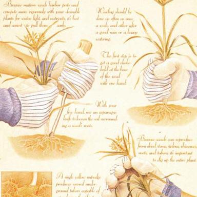 Ciba-Geigy Turf & Ornamental Products