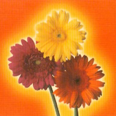 Flowers of Edina