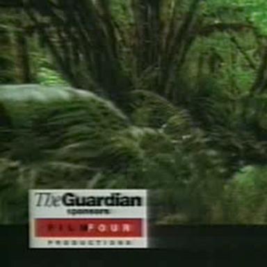 Rainforest, Following Car, Battle