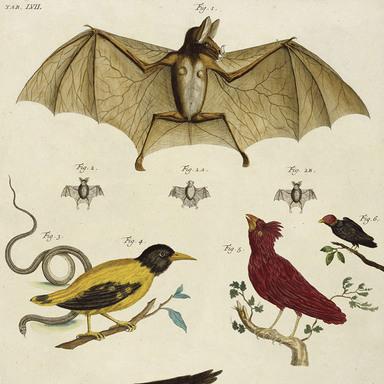 NISSAN PATROL BUGS, SPIDERS, BIRDS/BATS