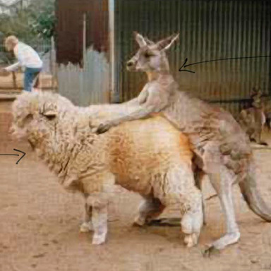 Kangaroo/Sheep