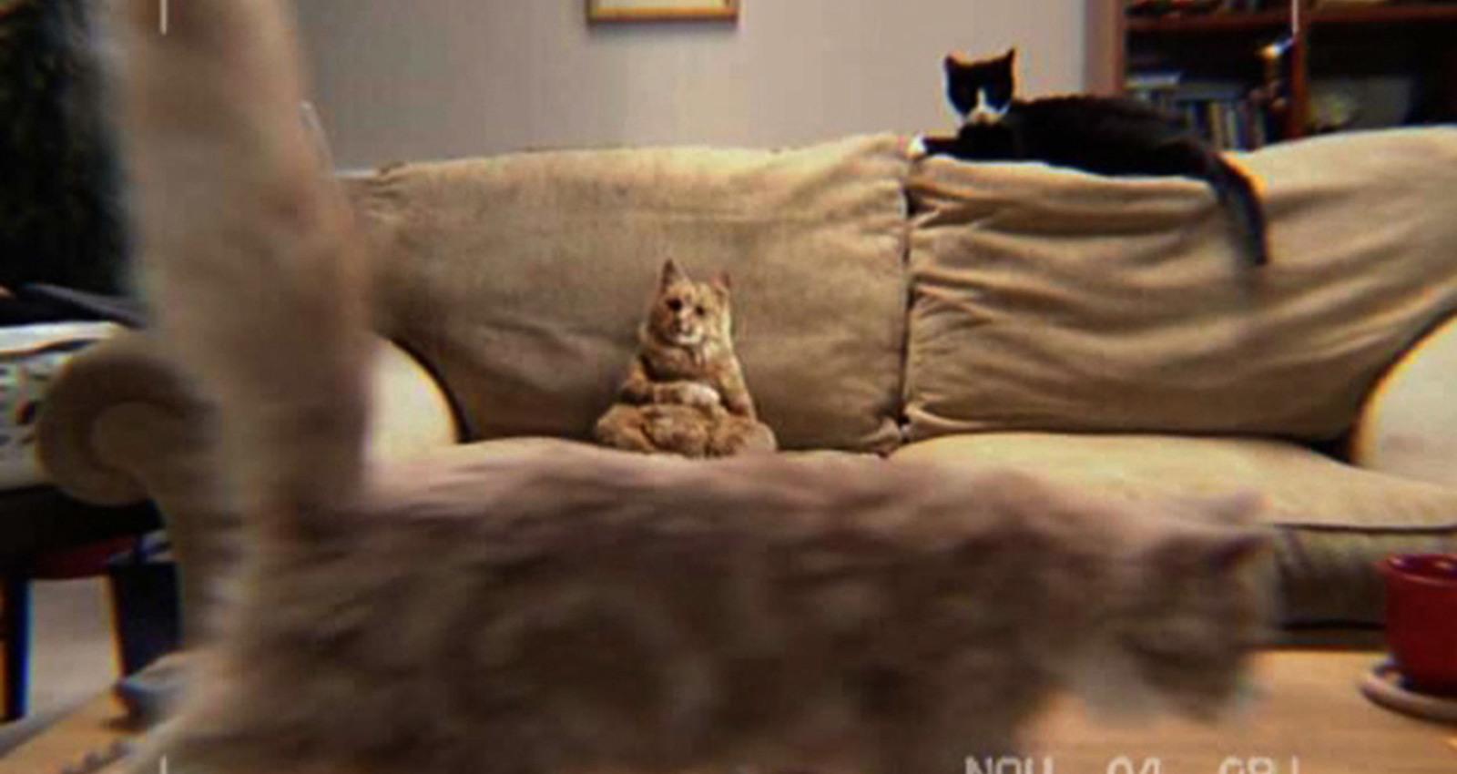 DANCING CAT
