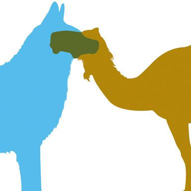 Husky & Camel