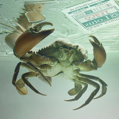 Crab in the pack