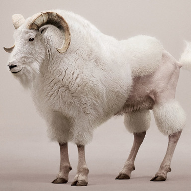 Billy-Goat