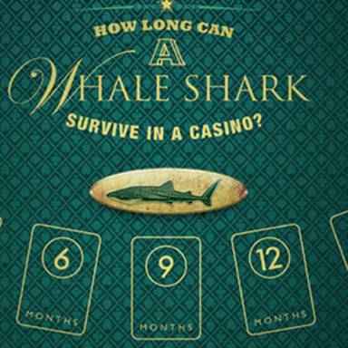 Whale Shark Gamble