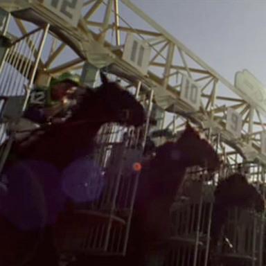 Warning Horses