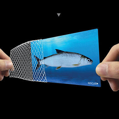 Fishnet Corporate ID