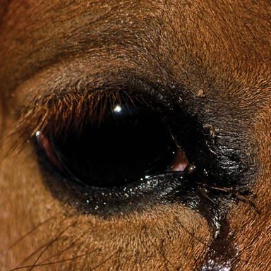 Human & Horse Reactions