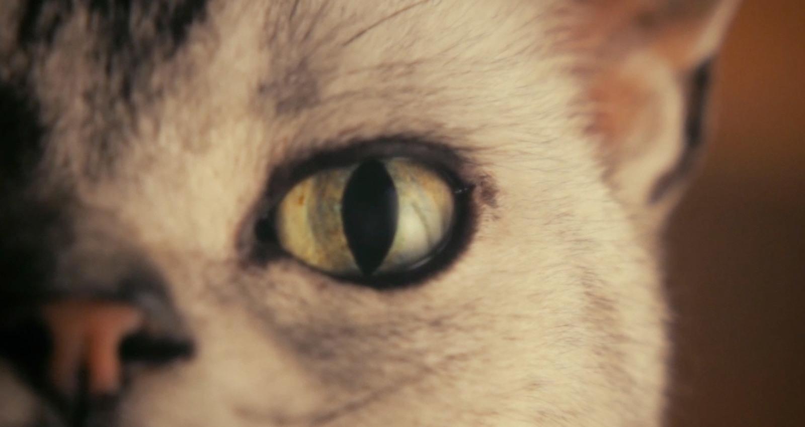 I Haz a Catnip in Mah Head