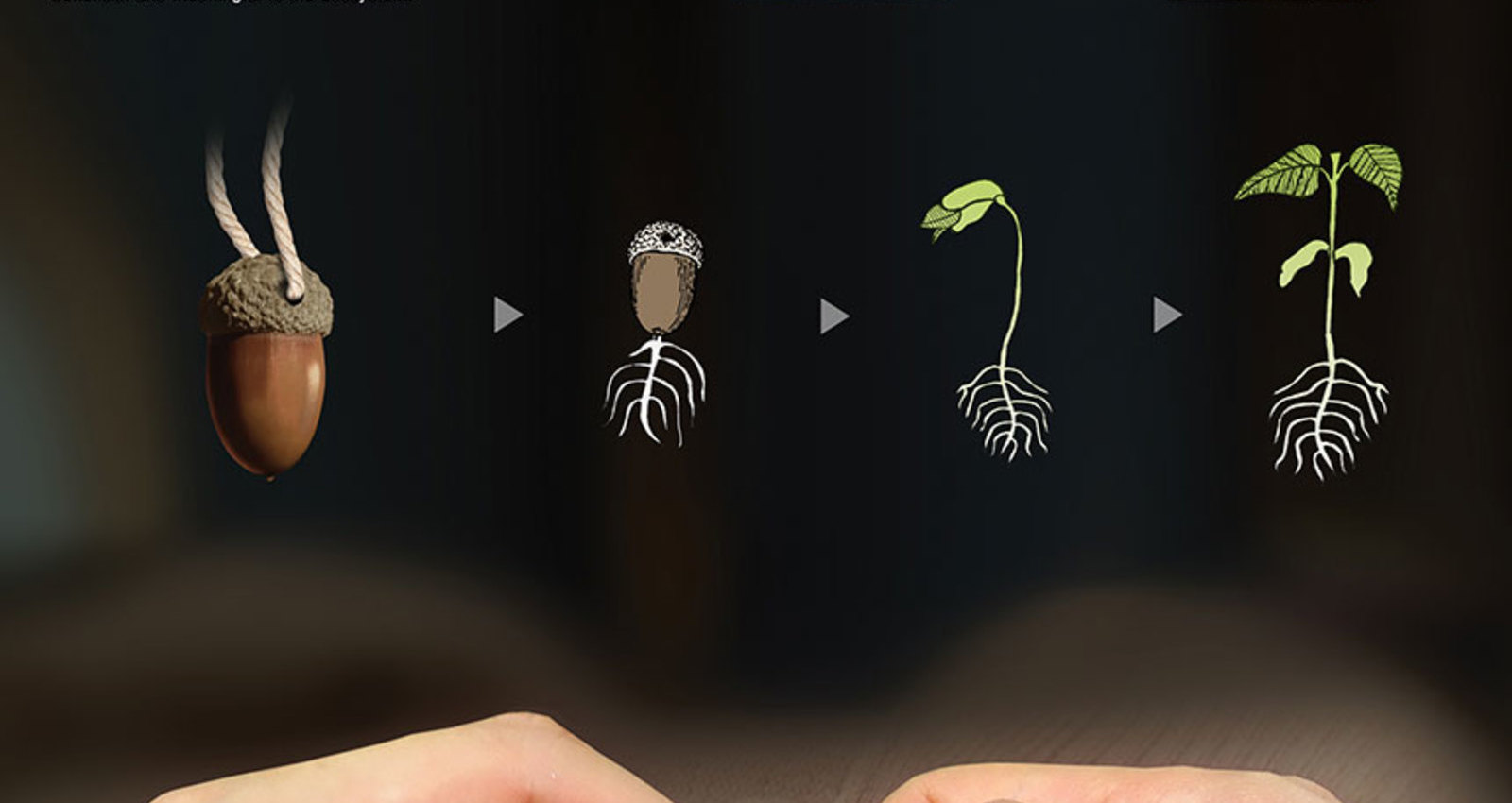 Seed button
