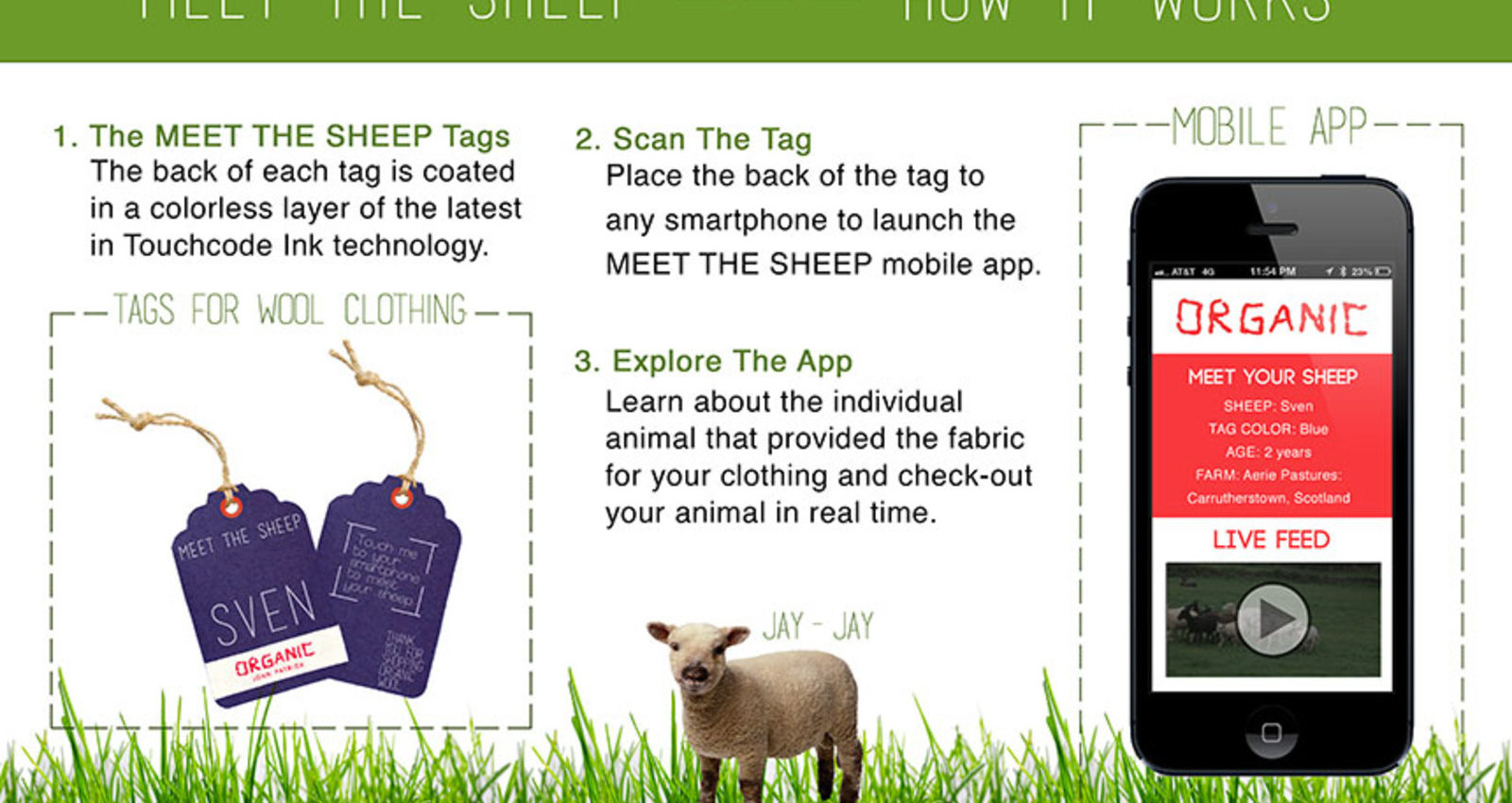 Meet The Sheep