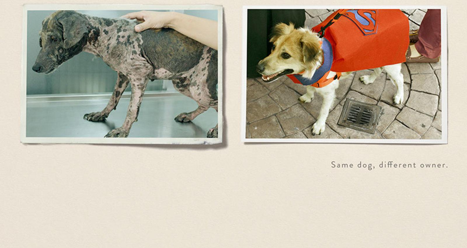 Rescue Pets