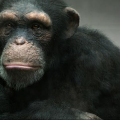 PETA '98% Human'