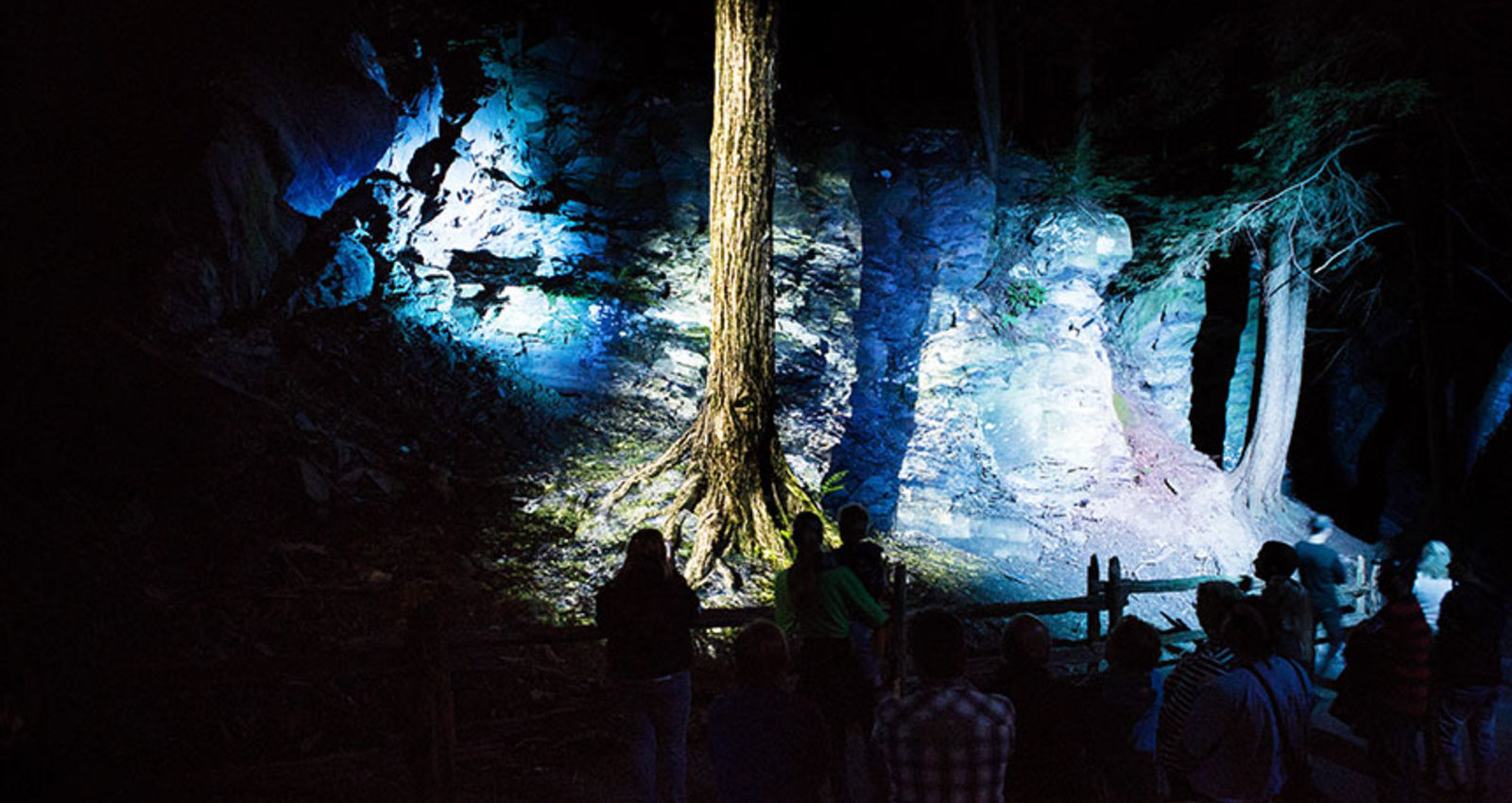 The enchanted woods of Foresta Lumina