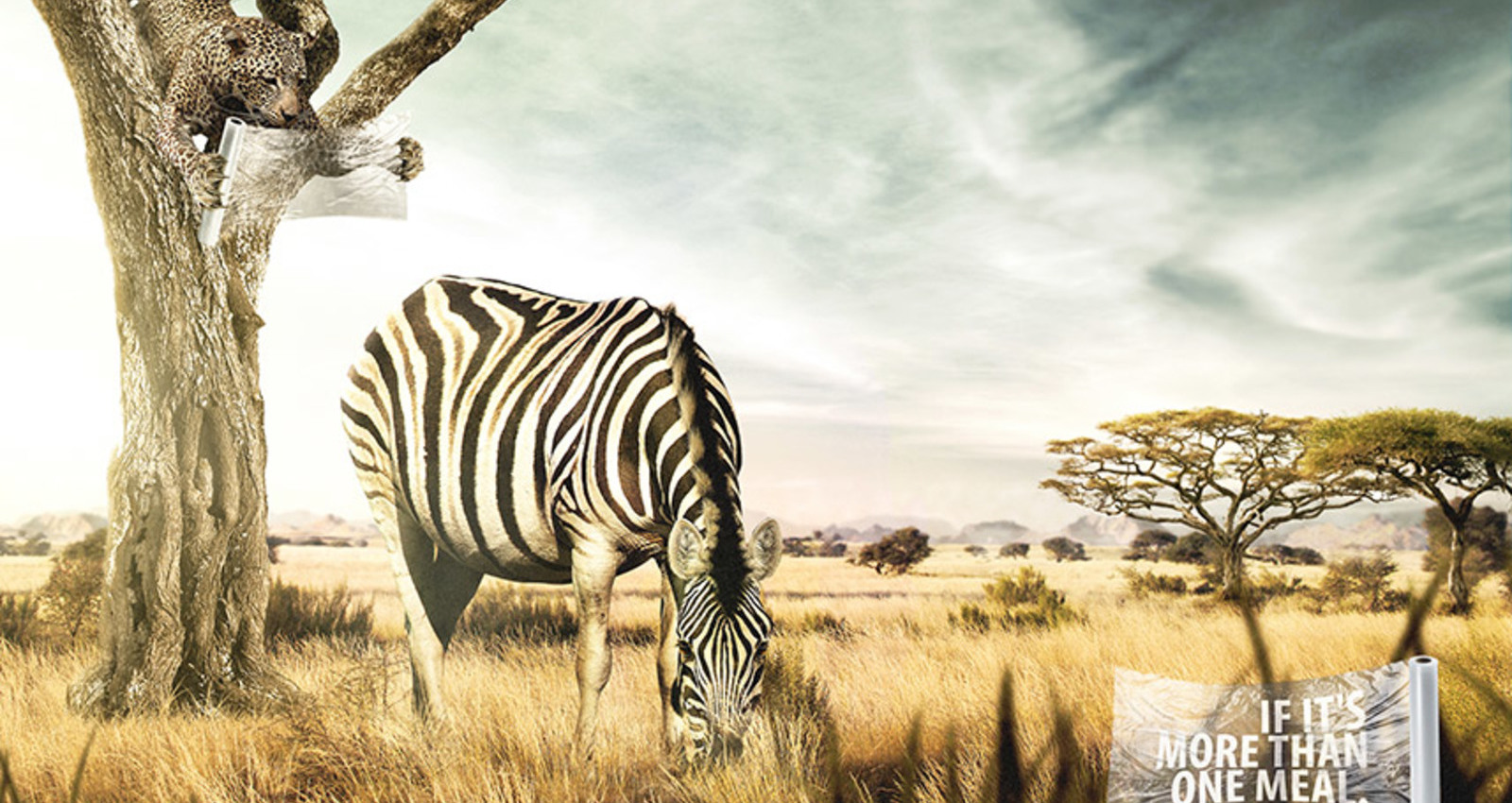 WILD MEALS / Zebra