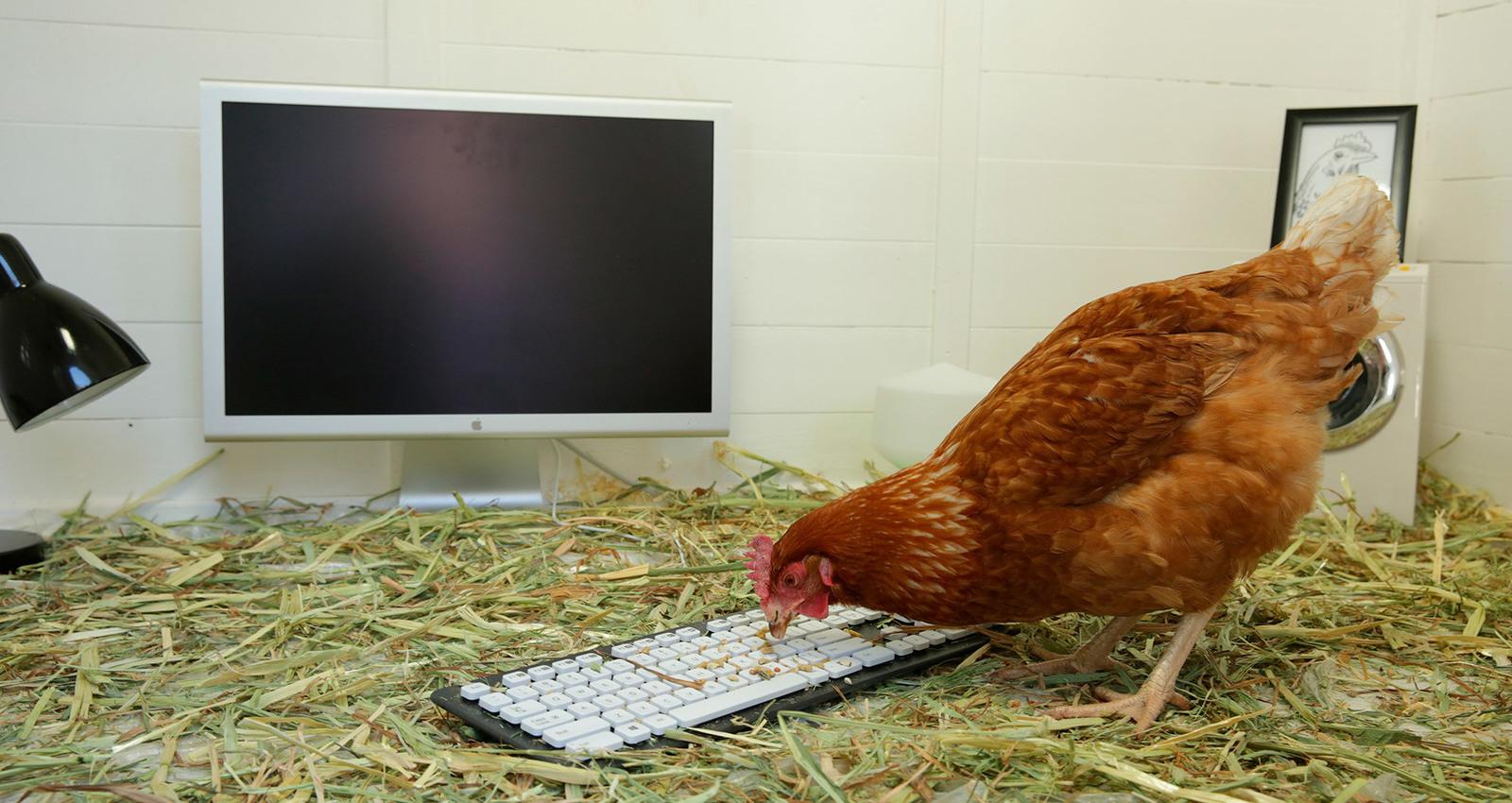 Chicken Tweet Betty