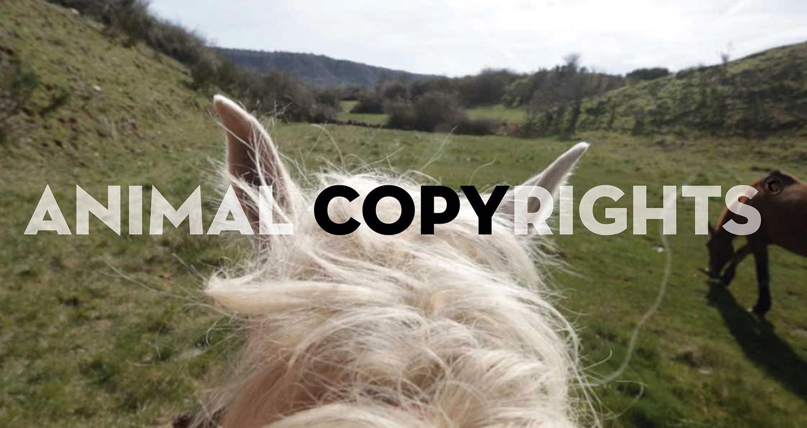 Animal Copyrights