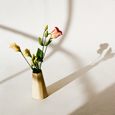 Shadows / Flowers