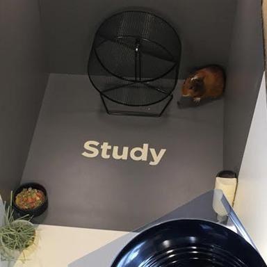Netflix or Study