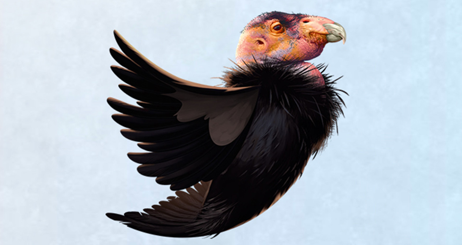 DONATE 4 BIRDS | THE NEW ECOSYSTEM