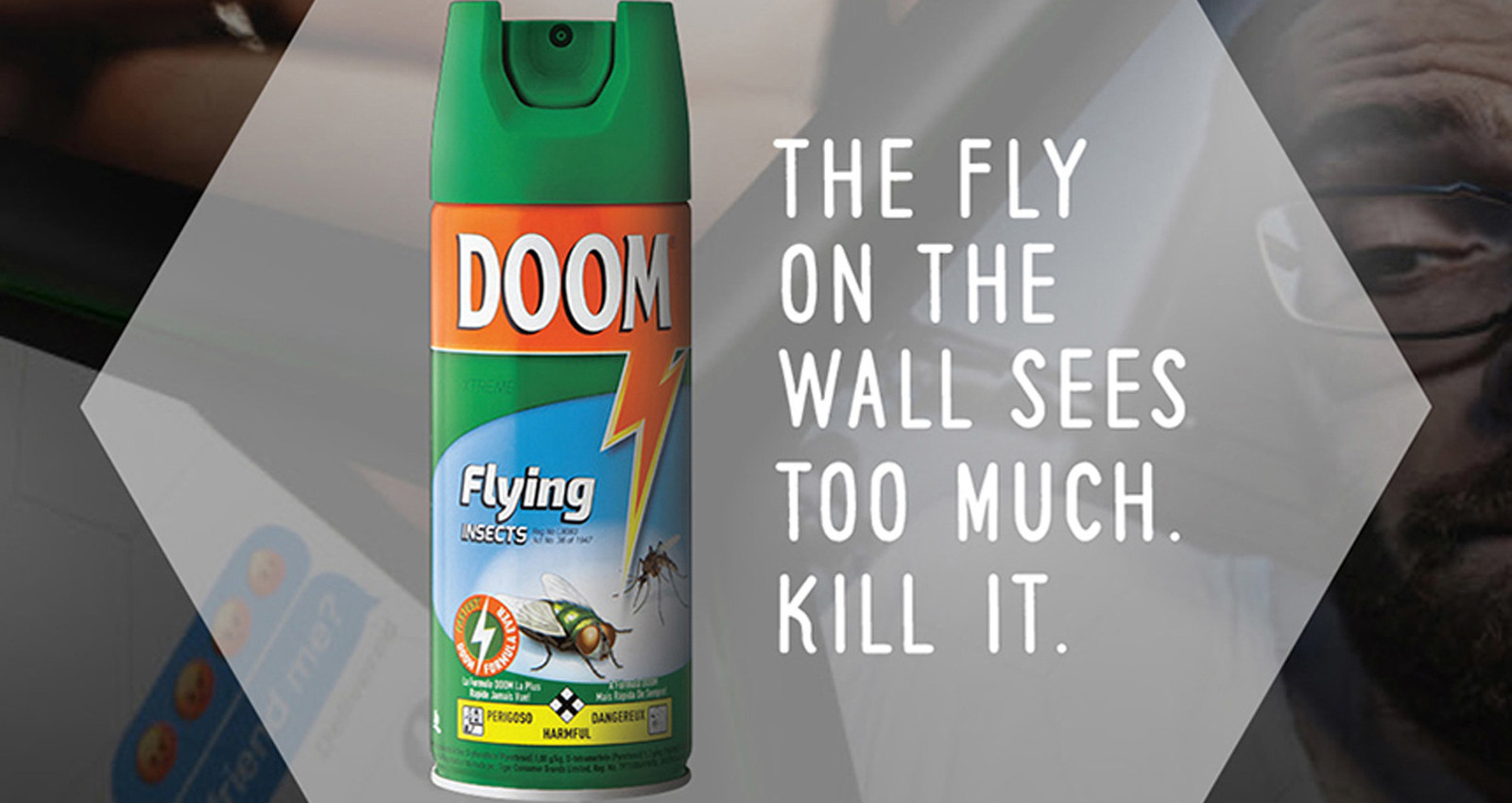 Fly on the Bathroom Wall