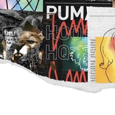 PUMA Hoops Branding System / Identity