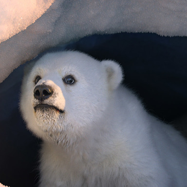 Dancing On Ice - Polar Bear & Squirrel