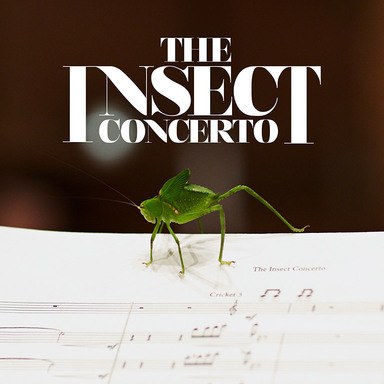 The Insect Concerto