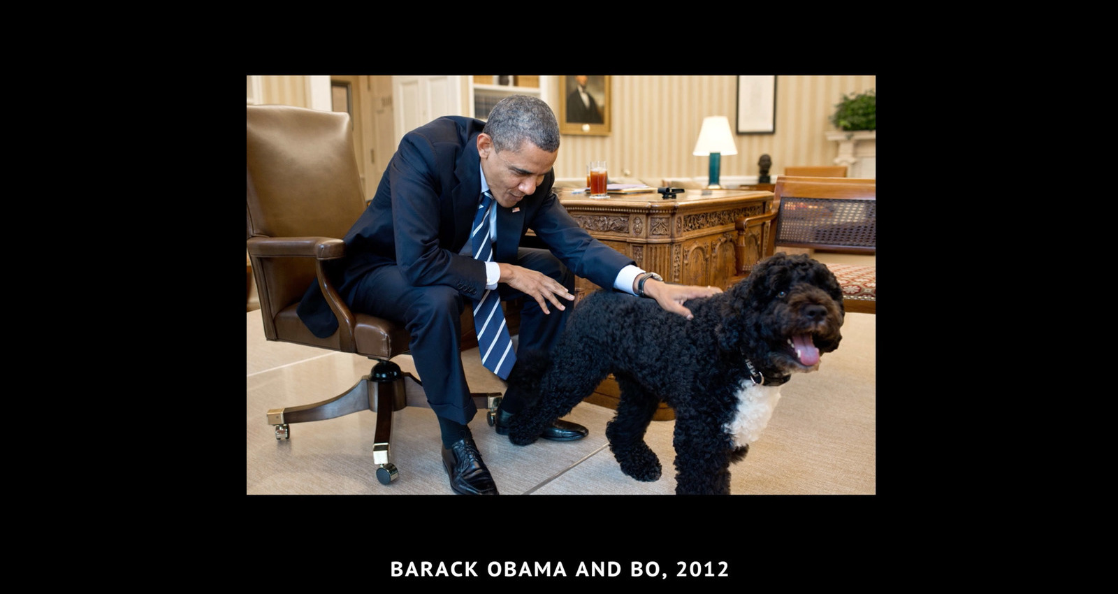President's Pets. Animals make us human. Adopt.