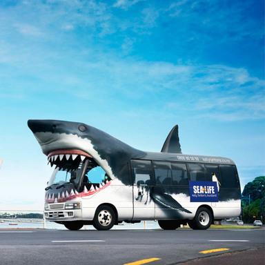 Shark Bait