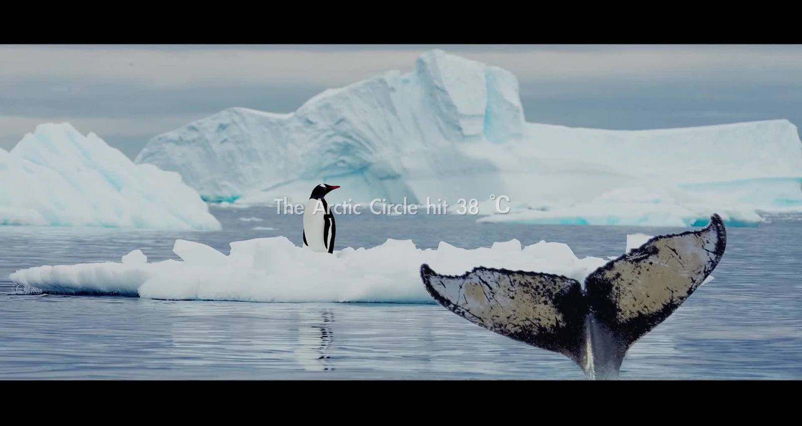 THE PENGUIN & THE WHALE
