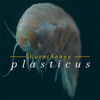 Eurythenes plasticus