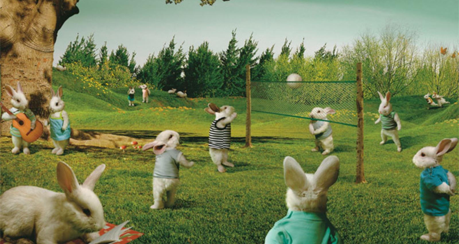 Tulipan, Rabbits
