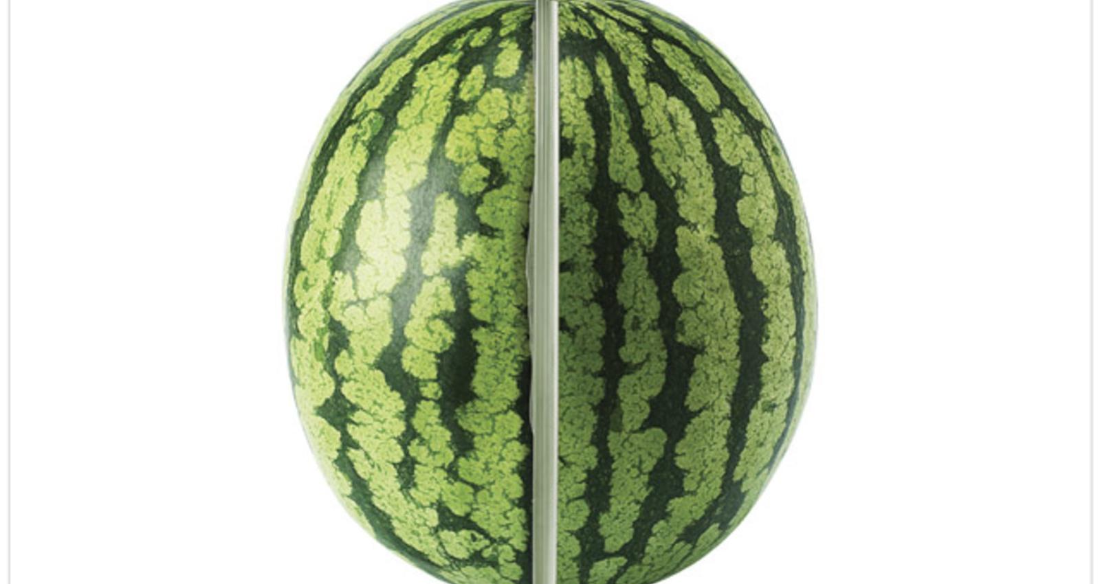 Orange/ Melon/ Onion/ Soybean/ Cockle