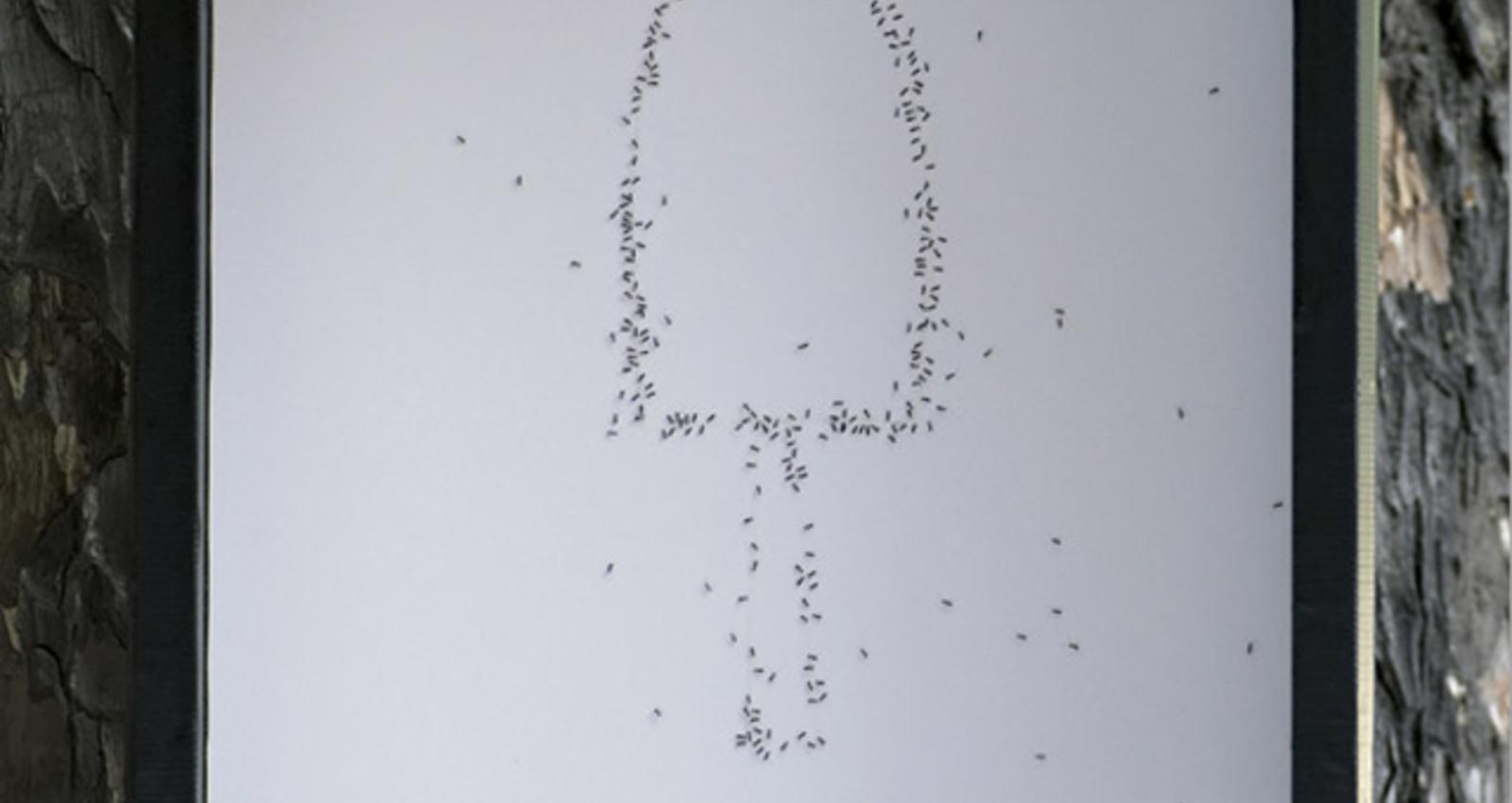 Sugar Free Ants Campaign