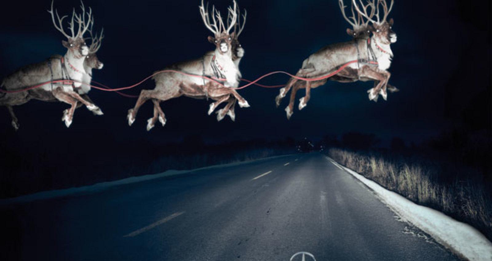 Reindeer in Headlights