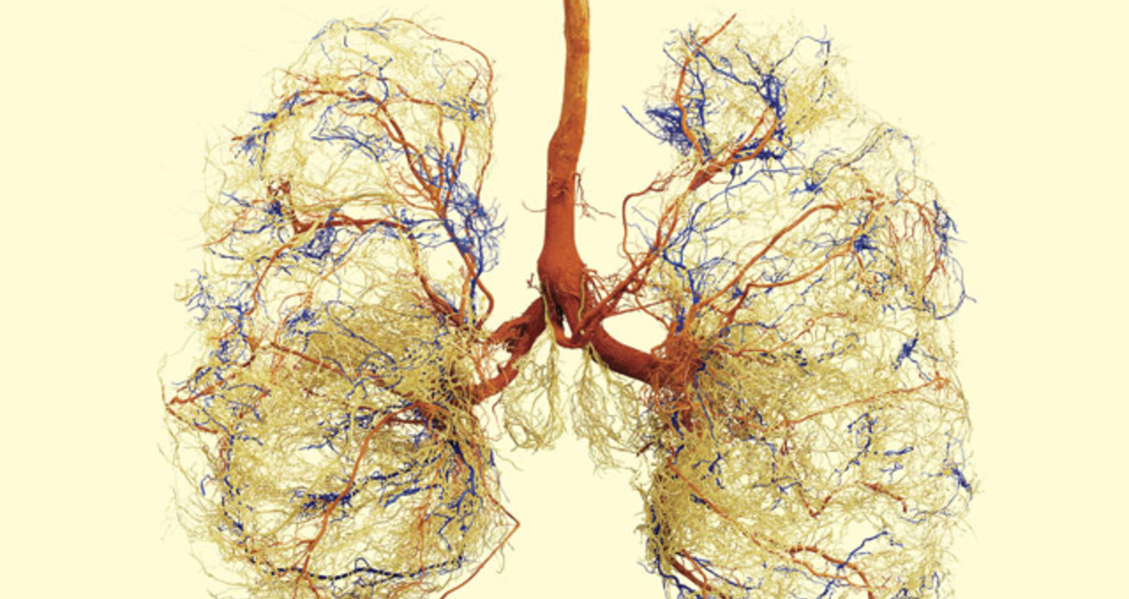 Heart Blood Veins/Foot Blood Veins/Lung Blood Veins