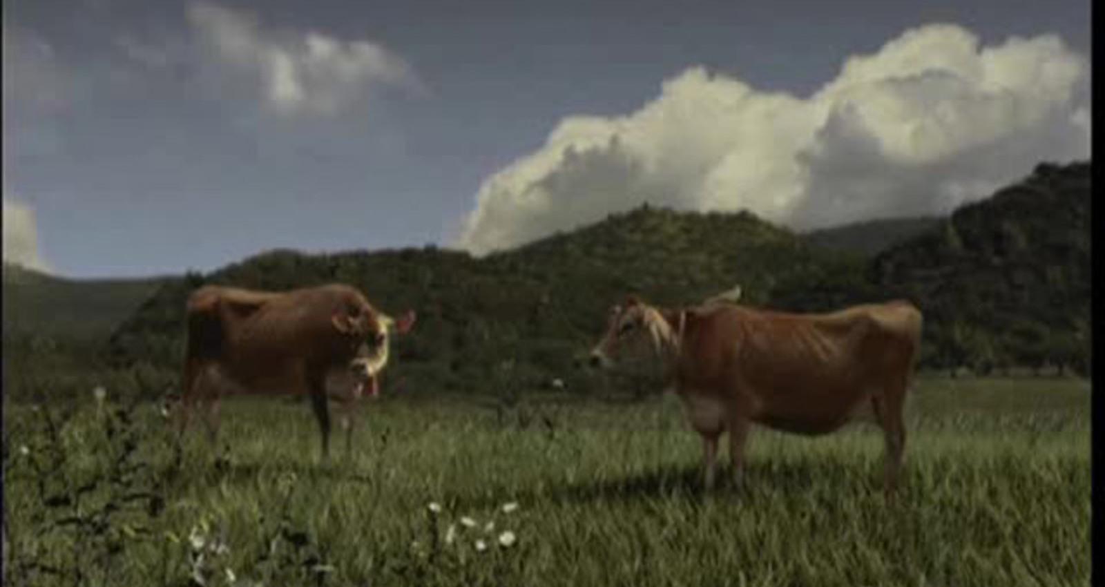 CMT Films - cow