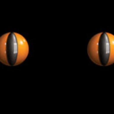 Eyes/Cat