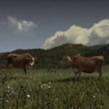 CMT Films - cow