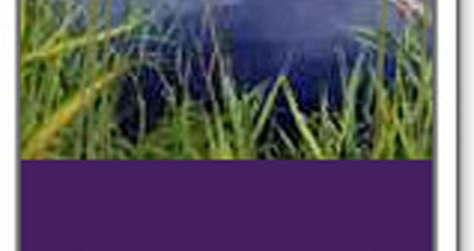Waterfall, Lake, Reeds, Grass